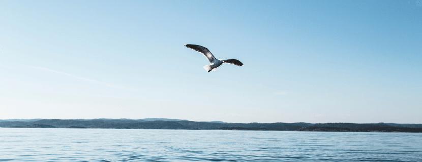 Geef je blog vleugels